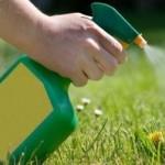 Умови використання гербицидів на плантації фундука